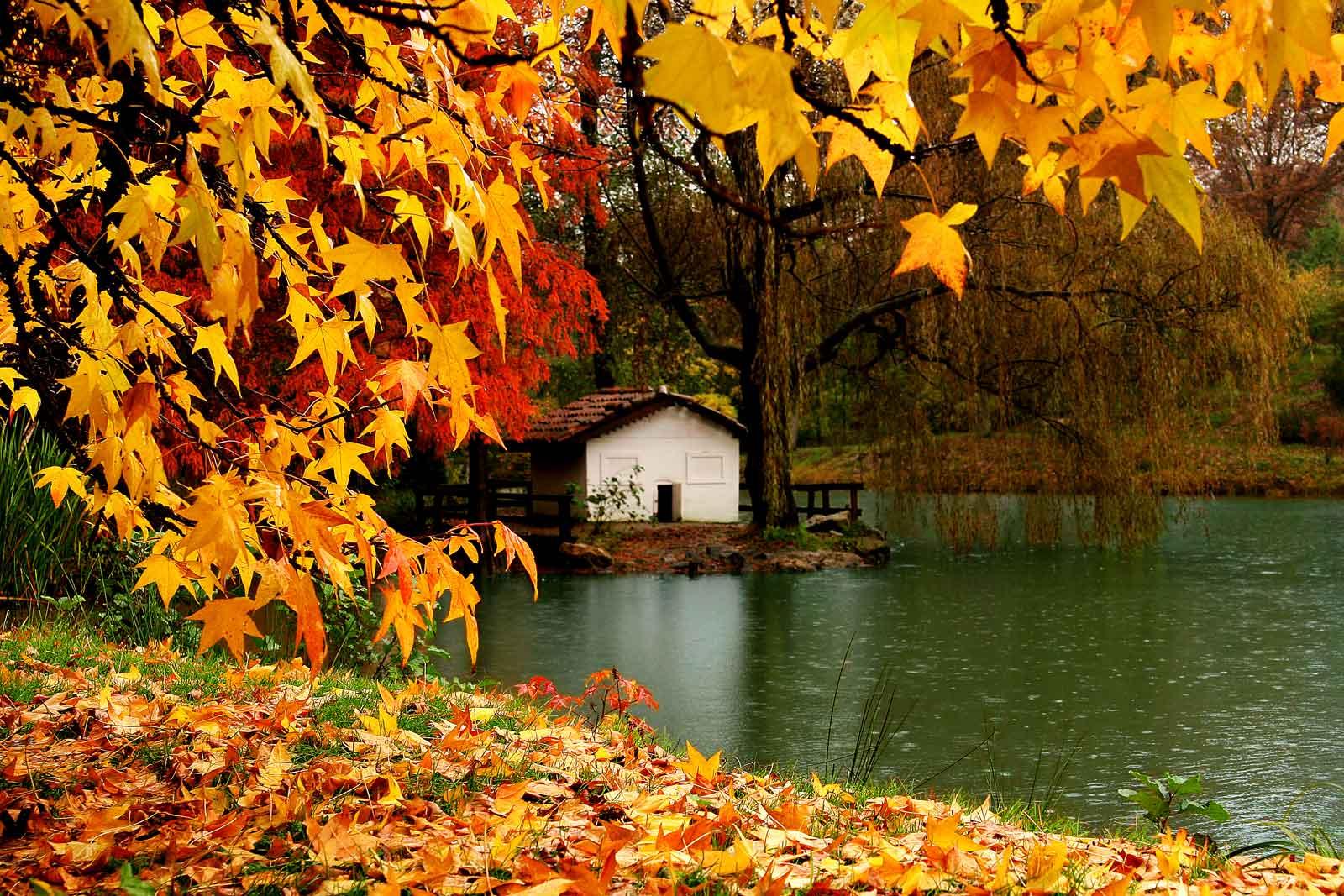 bahçeköy belgrad ormanı
