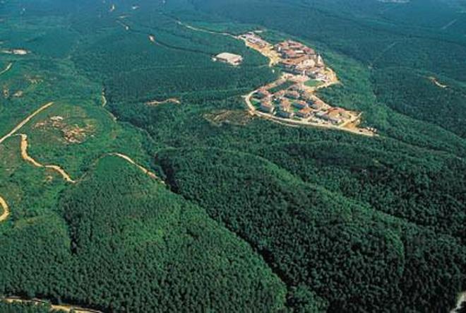 koç üniversitesi orman katliamı